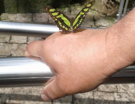 A psychic messenger or butterfly lands on your hand.